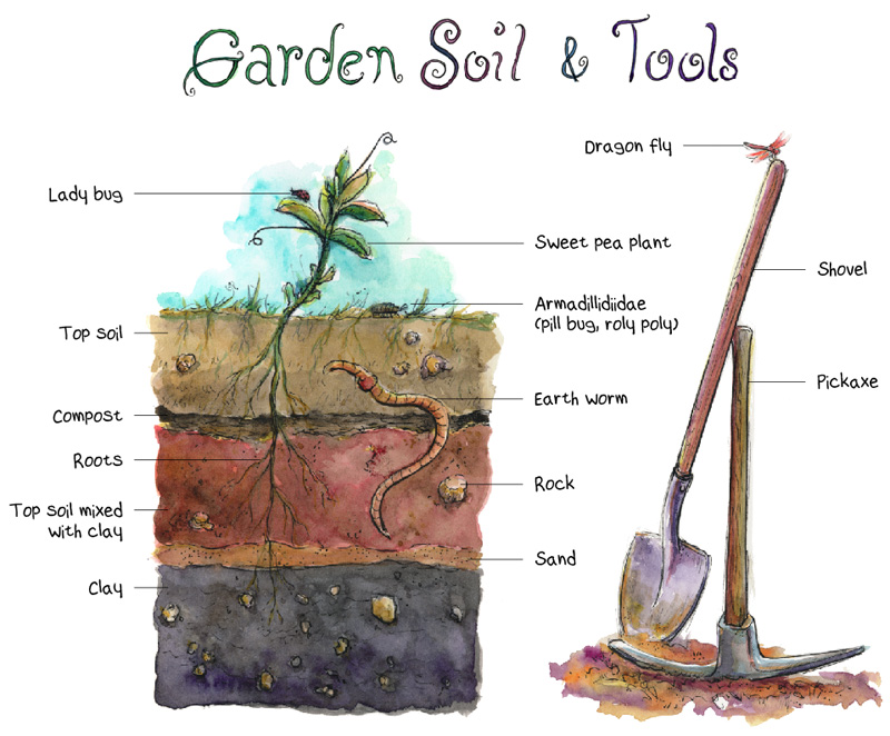 Preparing my garden s soil for planting the artist on for Gardening tools used in planting crossword clue