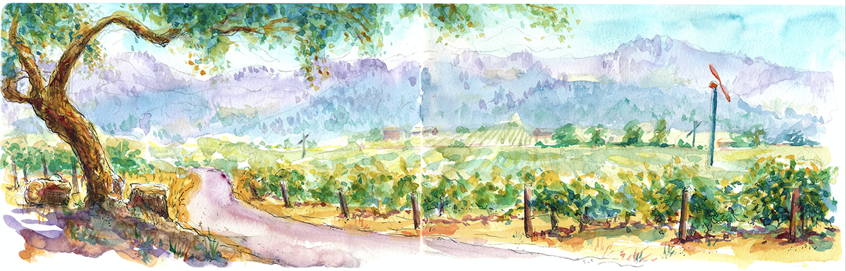 Chateau Montelena Cabernet Vineyard
